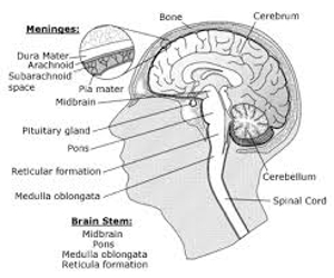 Overview of Brain Cancer