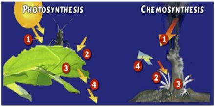 Chemosynthesis Assignment Point