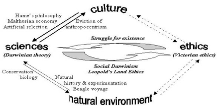 Cultural Selection Theory