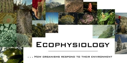 Ecophysiology