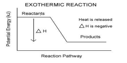exothermic essay The release of energy in chemical reactions occurs when the reactants have higher chemical energy than the products the chemical energy in a substance is a type of.