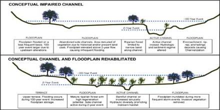 Floodplain Restoration