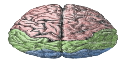 Isolated Brain
