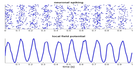 Neural Oscillation