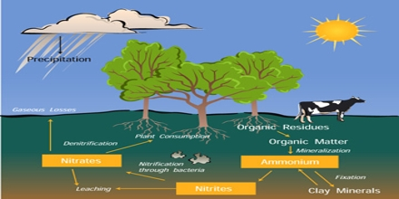 Nitrogen Cycle Process