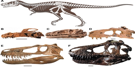 Paleobiology