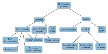 Phylogenetic Network