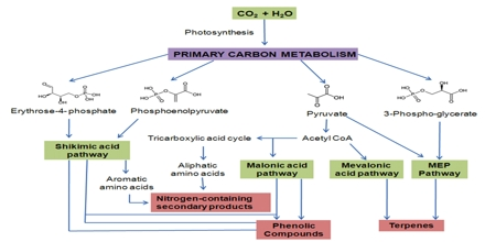 Plant Secondary Metabolism Assignment Point