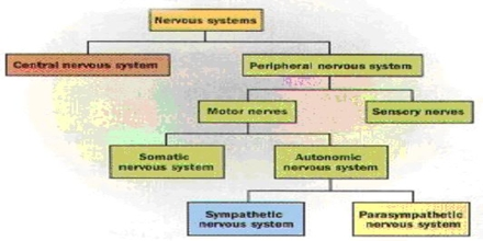 Systems Psychology