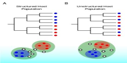 Viral Phylodynamics