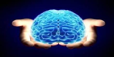 Whole Brain Emulation