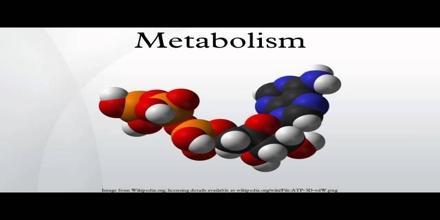 Anthropogenic Metabolism