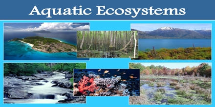 Aquatic Ecosystem Assignment Point