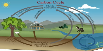 Carbon Cycle re-balancing