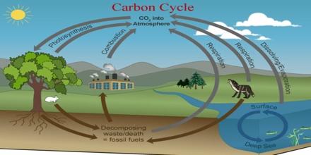 Carbon Cycle re-balancing