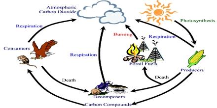Carbon Respiration