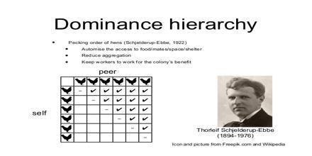 Dominance Hierarchy