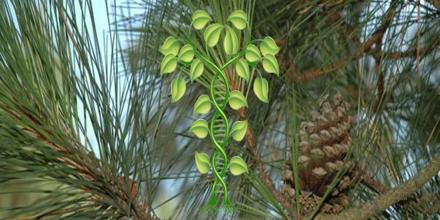 Genetically Modified Tree