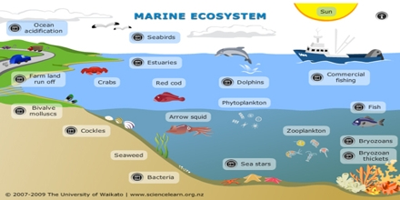 Marine Ecosystem Assignment Point