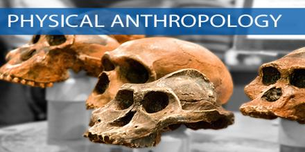 Forensic anthropology thesis for sale