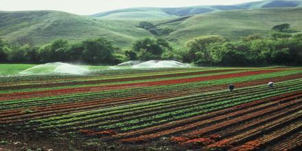 Prime Farmland