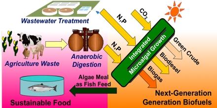 Sustainable Biofuel