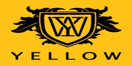 Financial Performance Evolution of Yellow by Beximco