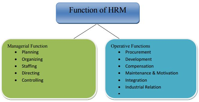 hrm functions of woolworths limited Strategic management analysis of woolworth and uk, woolworths have to consider their limited share in their human resources and.