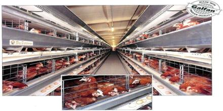 Develop a Poultry Farm and its Financial Forecast: Atlas Farms Limited