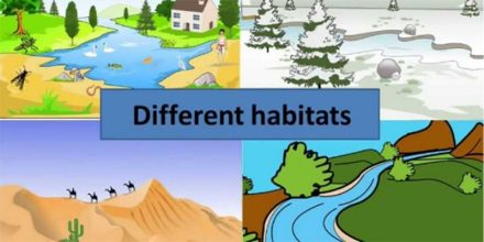 Animal Adaptations: Natural Habitats