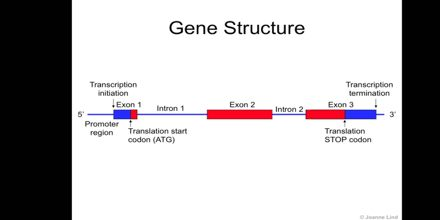 Gene Function and Structure