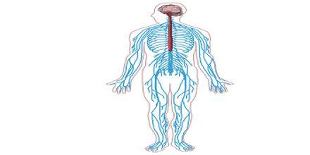 Nervous System and Drug Addiction