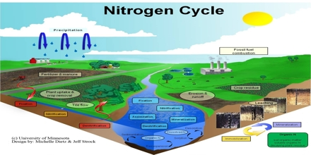 Lecture on Nitrogen Cycle