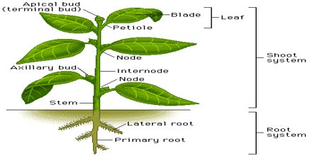 Plants Structure and Functions