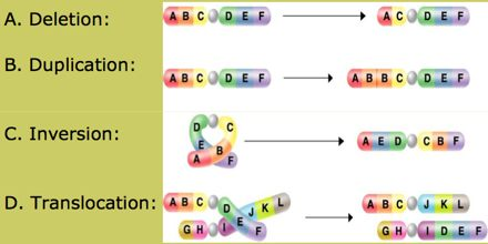 Variation in Structure of Chromosome
