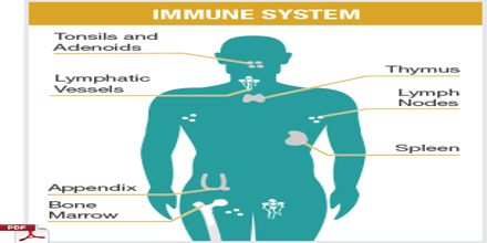 Lecture on The Immune System