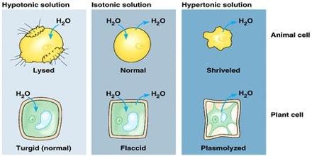 Osmosis homework help