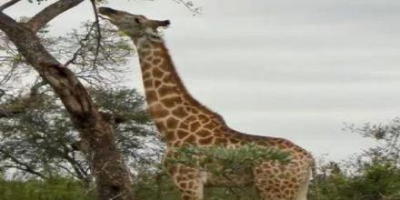 Adaptation in Animals