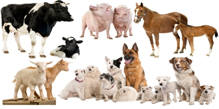 Animal Reproduction - Assignment Point
