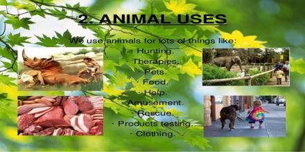 Animal Uses