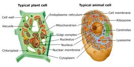 Cell Theory: Viewing Cells