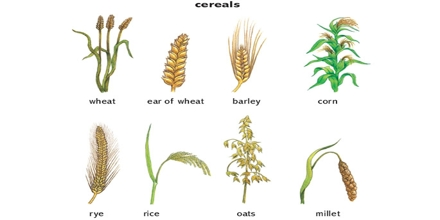 Cereal Crops Assignment Point