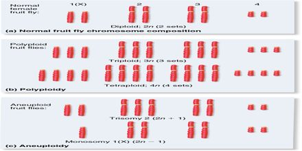 Variation in Chromosome Number