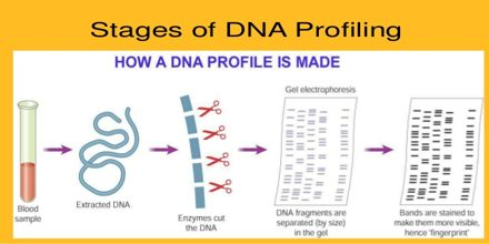 Dna Profiling Assignment Point