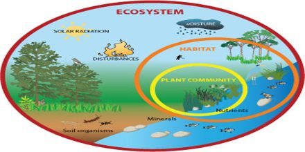 Ecosystems Assignment Point