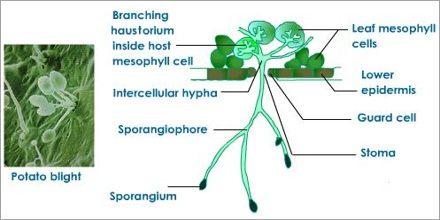 Heterotrophic Nutrition