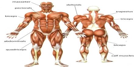 Human Body in Biology