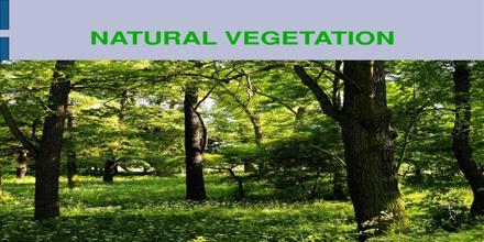 Natural Vegetation Assignment Point