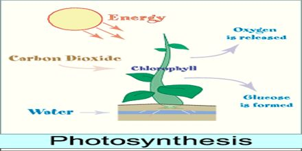 Lecture on Photosynthesis