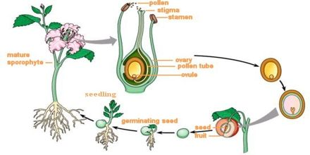 Pollination and Fertilization